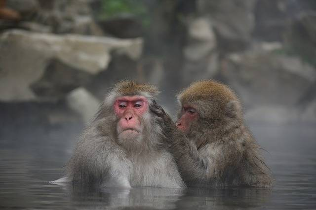 Animal Monkey Baby Japanese · Free photo on Pixabay (498)